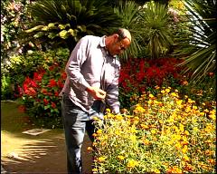 Vincenzo Amato mentre cura il giardino di Villa Rufolo